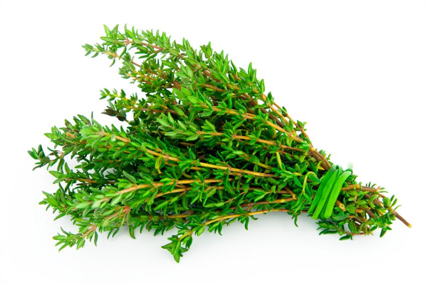 Thymus vulgaris (Kakukkfű)